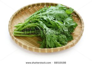 stock-photo-chrysanthemum-greens-garland-chrysanthemum-shungiku-88519198